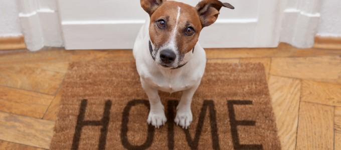 Casa in affitto: cane domestico